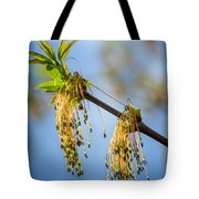 Catkin Time 2 Tote Bag