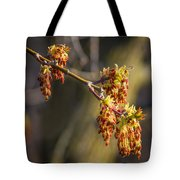 Catkin Time 4 Tote Bag