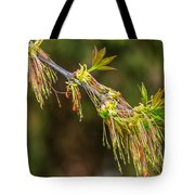 Catkin Time 5 Tote Bag