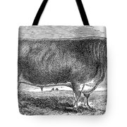 Cattle, C1880 Tote Bag by Granger