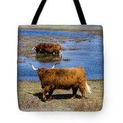 Cattle Scottish Highlanders, Zuid Kennemerland, Netherlands Tote Bag