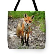 Cautious But Curious Red Fox Portrait Tote Bag