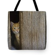 Cautious Kitty Tote Bag