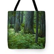 Cedar Grove Tote Bag