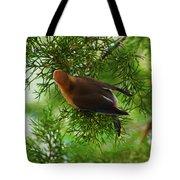 Cedar Waxwing Beauties 1 Tote Bag