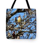 Cedar Waxwing II Tote Bag