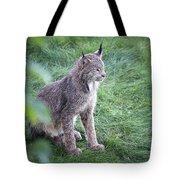Champion Mama Lynx Tote Bag by Tim Newton