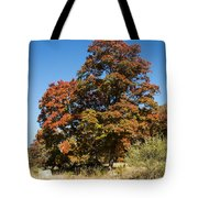 Changing Maple Colors Tote Bag