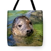 Cheeky Seal At Gweek Tote Bag