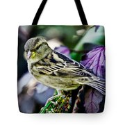 Cheeky Sparrow Tote Bag