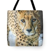 Cheeta Up Close Tote Bag