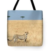 Cheetah Acinonyx Jubatus In Plains Tote Bag