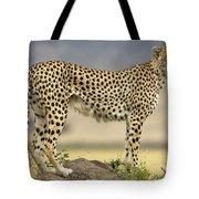 Cheetah Acinonyx Jubatus On Termite Tote Bag