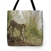 Cheetah Exploration Tote Bag