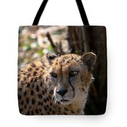 Cheetah Gazing Tote Bag