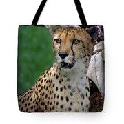 Cheetah Tote Bag
