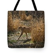 Cheetah  In The Brush Tote Bag by Douglas Barnett