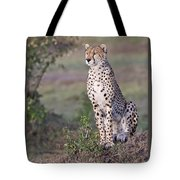 Cheetah Meditating Tote Bag