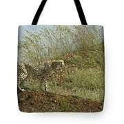 Cheetah On The Prowl Tote Bag