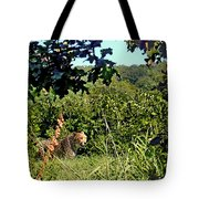 Cheetah Zoo Landscape Tote Bag