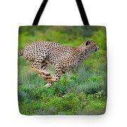 Cheetahs Acinonyx Jubatus Hunting Tote Bag