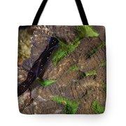 Chelidonura Punctata Nudibranch Tote Bag