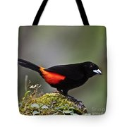 Cherrie's Tanager Tote Bag by Heiko Koehrer-Wagner