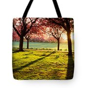 Cherry Blossom In A Park At Dawn Tote Bag