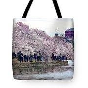 Cherry Blossom In Washington D C Tote Bag