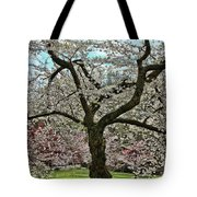 Cherry Blossom Trees Of Branch Brook Park 31 Tote Bag
