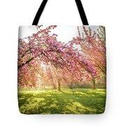 Cherry Flowers Garden Illuminated With Sunrise Beams Tote Bag
