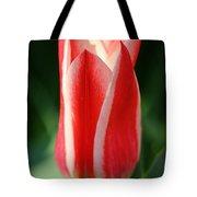Cherry Pin Stripes Tote Bag