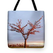 Cherry Tree Standing Alone In A Park, Lit By The Light  Tote Bag