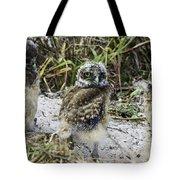 Chick Burrowing Owl  Tote Bag