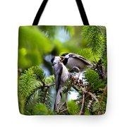 Chickadee Feeding Time Tote Bag