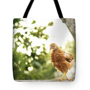 Chicken On Fence Tote Bag