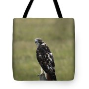 Chickenhawk Tote Bag