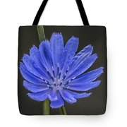 Chicory Flower Tote Bag
