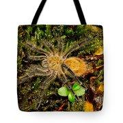 Chilean Tarantula Tote Bag