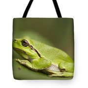 Chilling Tree Frog Tote Bag by Roeselien Raimond