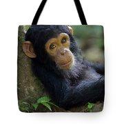 Chimpanzee Pan Troglodytes Baby Leaning Tote Bag