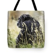 Chimpanzee Sitting In The Grass Tote Bag