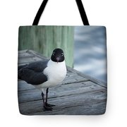 Chincoteague Island - Great Black-headed Gull Tote Bag