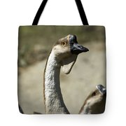 Chinese Geese Anser Cygnoides At Zoo Tote Bag