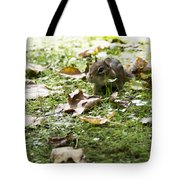 Chipmunk Getting Ready For Winter Tote Bag