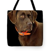 Chocolate Lab Tote Bag by William Jobes