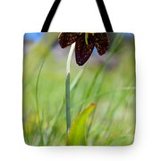 Chocolate Lily Two Tote Bag