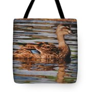 Christchurch New Zealand Grey Duck Tote Bag
