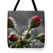 Christmas In May Tote Bag