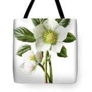 Christmas Rose Floral Illustration Tote Bag